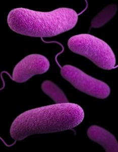 Zakażenie szpitalne – kiedy występuje bakteria